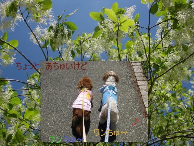 2010_05_131_convert_20100515170837.jpg