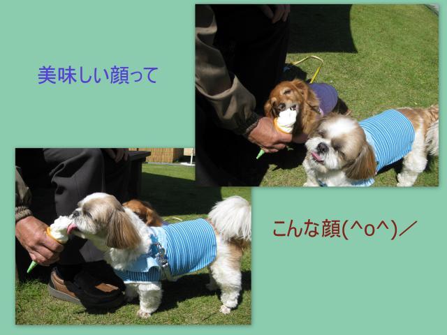 2010_05_138_convert_20100515165822.jpg