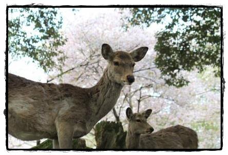 奈良l公園2