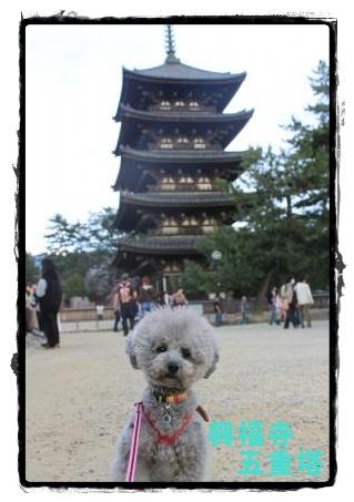 奈良l公園4