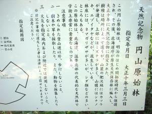 札幌原始林 2