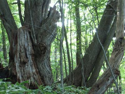 札幌原始林 8