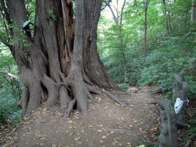 札幌原始林 22