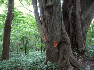 札幌原始林 23