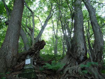 札幌原始林 13
