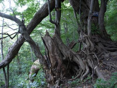 札幌原始林 14