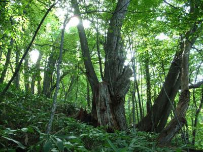 札幌原始林 10