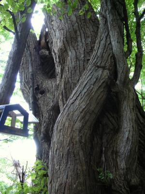 札幌原始林 18