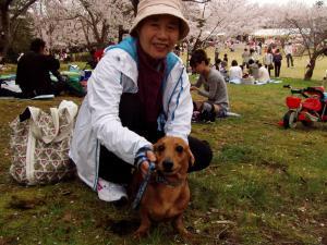 sakura6_convert_20120415172227.jpg