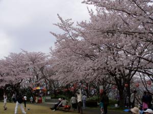 sakura8_convert_20120415173405.jpg
