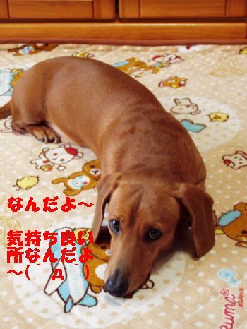 ugokimaten2_convert_20120325161002.jpg