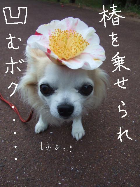 2010_03302010年3月お花見ドラ0057椿を乗せられ凹むボク
