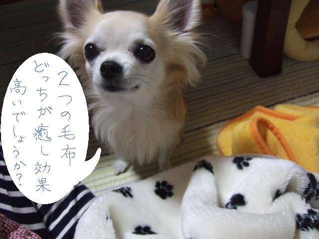 2010_02262010年1月7日 七草0007HARUからの質問
