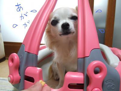 2010_0411繝代ヴ繝シ繝舌せ鬆ュ騾壹○縺壼峅繧企。披蔵_convert_20100412095235