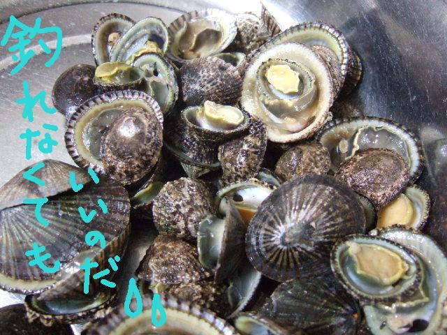 2010_03202010年春のお彼岸0006かたきゃぁと呼ばれる貝