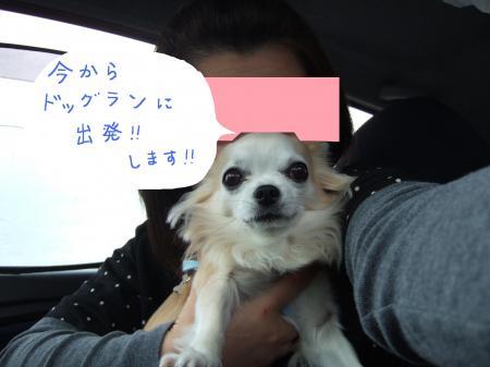 2010_0418螯呵ヲウ蟇コ繝峨ャ繧ー繝ゥ繝ウ竭