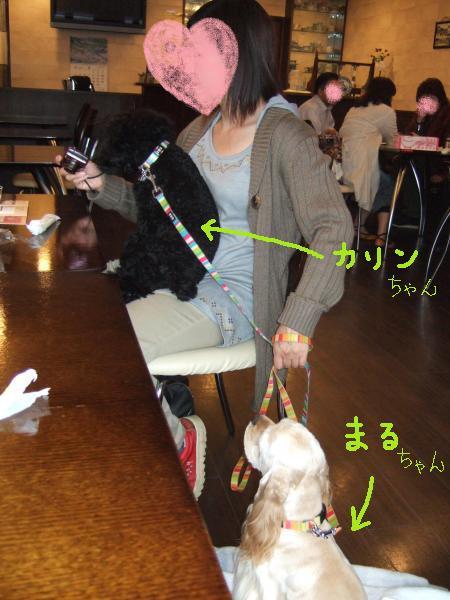 2010_0418莨贋ク・㈹繝峨ャ繧ー繧ォ繝輔ぉ竭。_convert_20100418223211