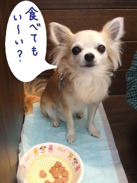 2010_0418ドッグカフェ食べてもいい