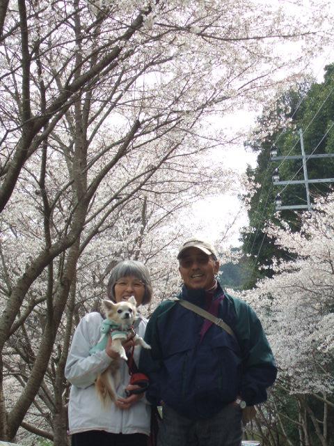 2010_03302010年3月お花見ドラ0013