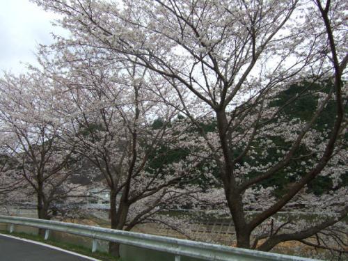 2010_03302010年3月お花見ドラ0018