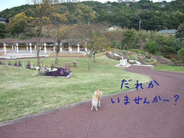 2010_03302010年3月お花見ドラ0056公園にポツン誰かいませんか?