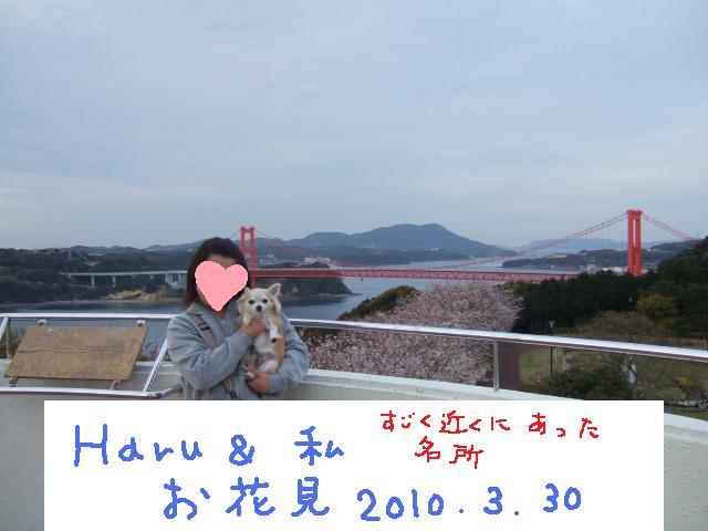 2010_03302010年3月お花見ドラ0051HARUと私の花見イン田平公園