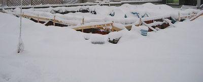 基礎が雪に・・・2010.2.2