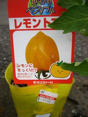 レモントマト・・100円!