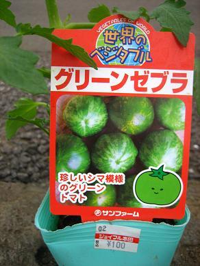 グリーンゼブラ・・100円!