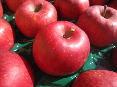 真っ赤なリンゴです!