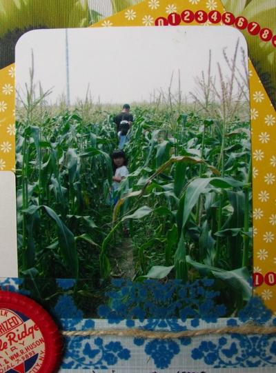 cornfarm-4.jpg