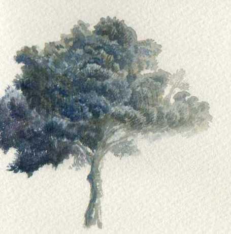 木の習作152
