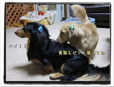 2010033105.jpg