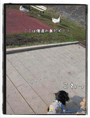2010041605.jpg
