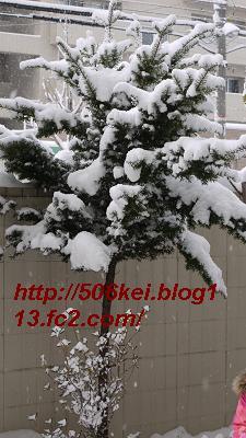 P1040314.jpg