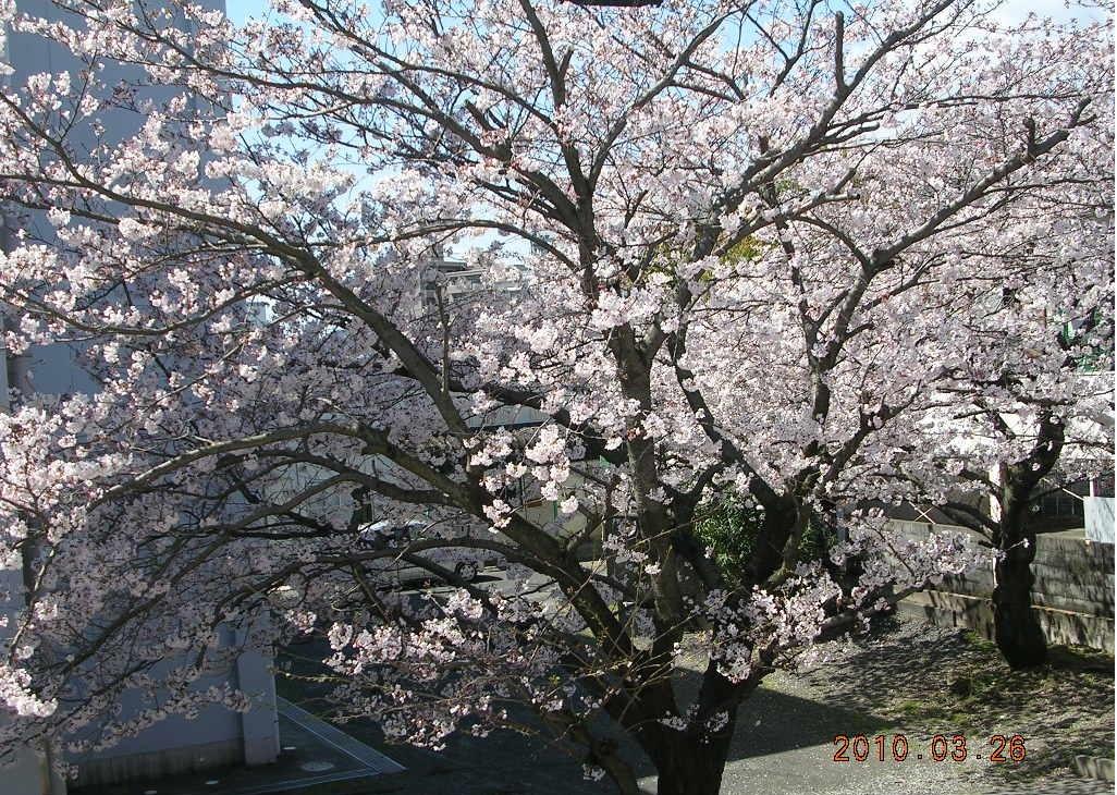 2010_0326_120755-DSCN7420.jpg