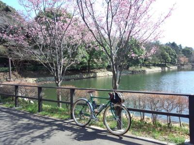 三ツ池公園 池と桜