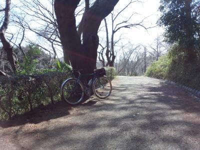 三ツ池公園 林道