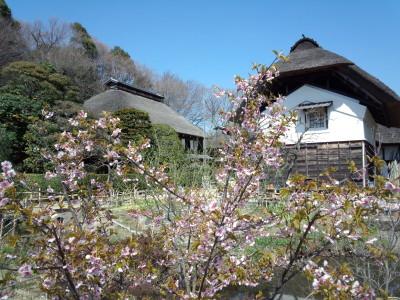 獅子ヶ谷 さくらと横溝屋敷