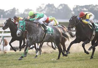 20110129-00000543-sanspo-horse-view-000.jpg