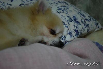 おやすみぃ~