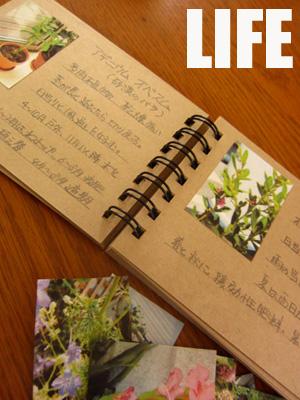 植物図鑑を作ろう