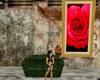 rosepicture.jpg