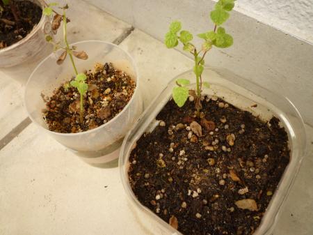植物たち2