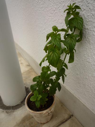 植物たち5