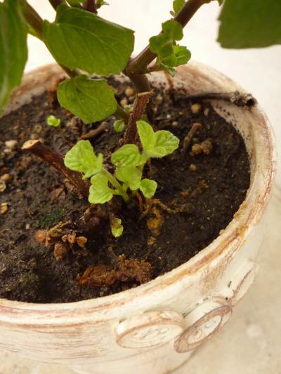 植物たち6