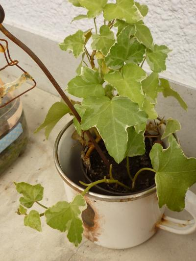 植物たち7