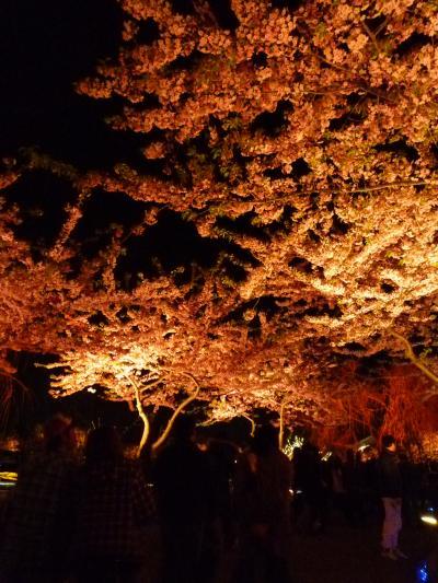 なばな夜桜2