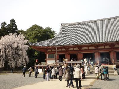醍醐寺24
