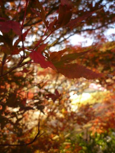 紅葉狩り・嵐山36
